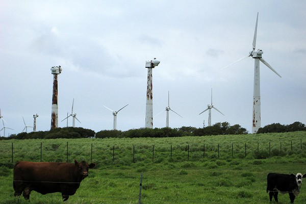 Aging Wind Generators and Cows