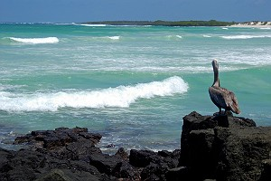A Pelican in Paradise