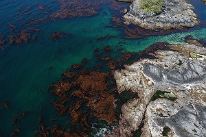 Kelp Forest and Tide Pools