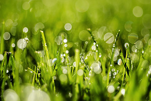 Macro Grass with Water Drops
