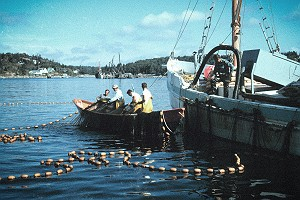 Vintage Purse Seining for Herring