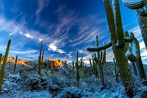 Winter Snow on Saguaro Cactus